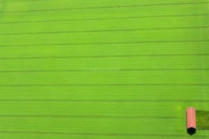 Aerial view of a field barn in the lower right corner of a grain field - Klaus Leidorf Aerial Photography