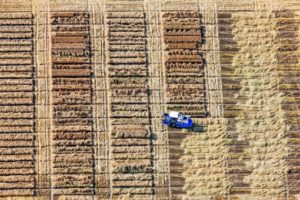 Aerial view of harvesting in a seed field near Sechtem - Klaus Leidorf Aerial Photography
