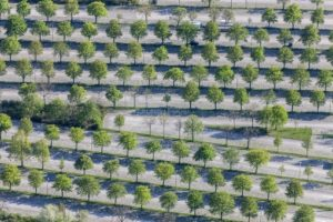 Aerial view of rows of trees at the parking lot at the park harp in Munich-Milbertshofen - Klaus Leidorf Aerial Photography