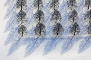 Aerial view of the rows of linden trees in winter at the South Cemetery in Munich-Perlach - Klaus Leidorf Aerial Photography