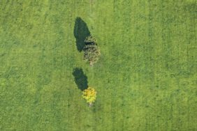 Aerial view of two trees in the meadow - Klaus Leidorf Aerial Photography