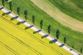 Aerial view of a poplar avenue on the rape field - Klaus Leidorf Aerial Photography