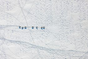Aerial view of fallow deer in the snow - Klaus Leidorf Aerial Photography