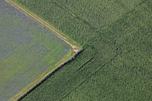 Aerial view of fields with phacelia and corn - Klaus Leidorf Aerial Photography