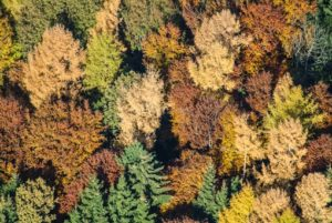 Aerial view of colorful trees of a mixed forest in autumn - Klaus Leidorf Aerial Photography