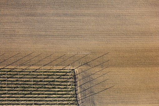 Aerial view from the corner of a hop field with shadows cast in the evening light - Klaus Leidorf Aerial Photography