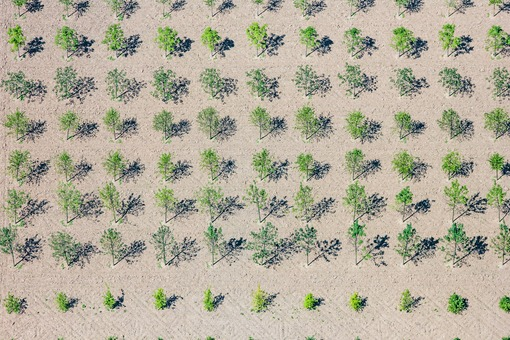 Aerial view of the municipal tree nursery in Munich-Pasing - Klaus Leidorf Aerial Photography
