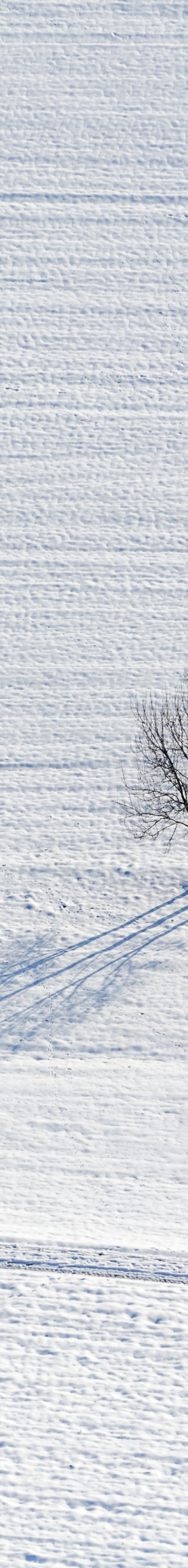 Aerial view of three groups of trees in winter - Klaus Leidorf Aerial Photography