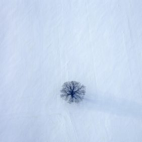Aerial view of a tree in a snowy winter landscape - Klaus Leidorf Aerial Photography