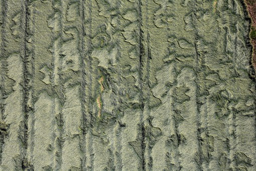 Aerial view of a grain field that has largely turned over after heavy rains - Klaus Leidorf Aerial Photography