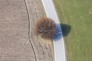 Aerial view of a globular tree, still without leaves - Klaus Leidorf Aerial Photography