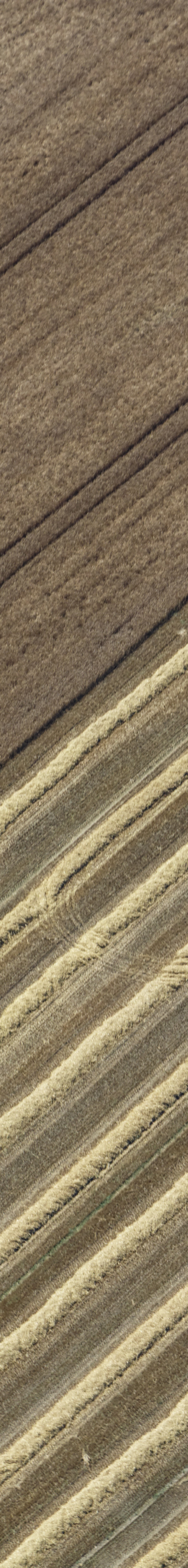 Aerial view of a combine harvester harvesting grain, a tractor pulls a trailer full of cereal grains away - Klaus Leidorf Aerial Photography