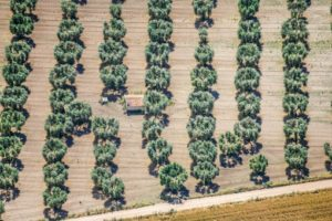 Aerial view of an olive oil plantation in Puglia - Klaus Leidorf Aerial Photography