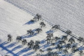 Aerial view of a orchard in winter - Klaus Leidorf Aerial Photography