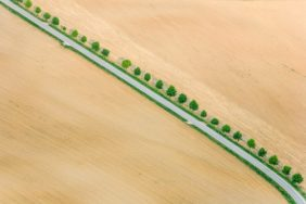 Aerial view of a fresh green row of trees along the way between two newly ordered corn fields - Klaus Leidorf Aerial Photography