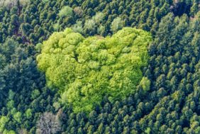 Aerial view of a fresh green deciduous forest island in the coniferous forest - Klaus Leidorf Aerial Photography