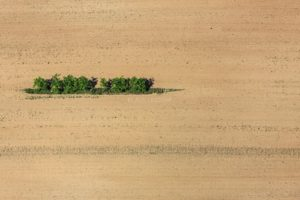 Aerial view of a green island in farmland - Klaus Leidorf Aerial Photography