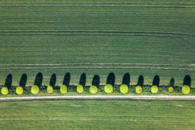 Aerial view of light green globular trees on the dirt road - Klaus Leidorf Aerial Photography
