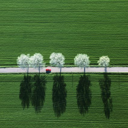 Aerial view of a red car on a street with flowering trees and their shadows - Klaus Leidorf Aerial Photography