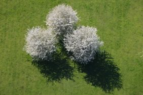 Three spring trees - Klaus Leidorf Aerial Photography