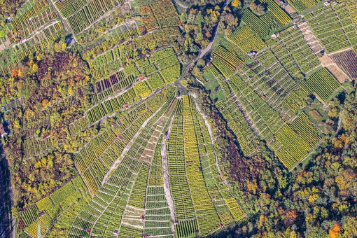 Aerial view of the wine growing area near Besigheim - Klaus Leidorf Aerial Photography