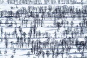 Aerial view of rows of trees on snow-covered fields between Gaißach and Lenggries in the Isar valley - Klaus Leidorf Aerial Photography