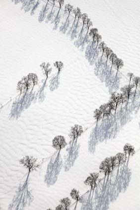 Aerial view of rows of trees in the snow - Klaus Leidorf Aerial Photography