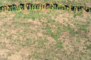 Aerial photograph of vegetation features on a field near Freiham - Klaus Leidorf Aerial Photography