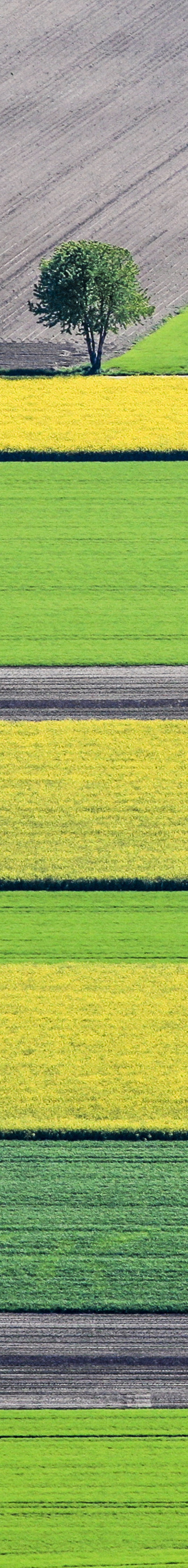 Aerial view of the agricultural landscape with flowering rapeseed fields southeast of Ismaning - Klaus Leidorf Aerial Photography