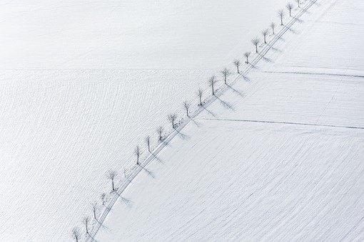 Aerial view of the cherry tree row near Vatersdorf in winter - Klaus Leidorf Aerial Photography