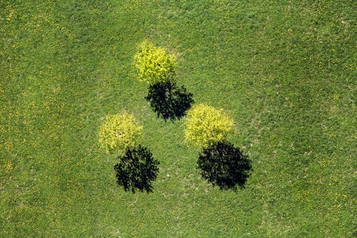 Aerial view of three fresh green trees on a meadow with flowering dandelion in Kleintrenk - Sibler near Griesbach in Rottal - Klaus Leidorf Aerial Photography