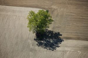 Aerial photo of a tree on zigzag field border - Klaus Leidorf Aerial Photography