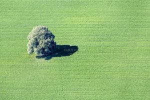 Aerial view of a single tree near Niederwörth - Klaus Leidorf Aerial Photography