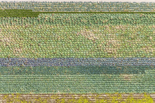 Aerial view of a vegetable field - Klaus Leidorf Aerial Photography