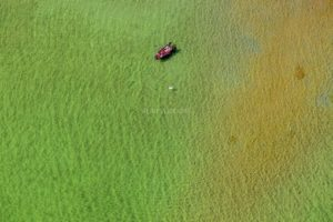 Aerial view of a rowing boat and a swan on the Starnberger See - Klaus Leidorf Aerial Photography