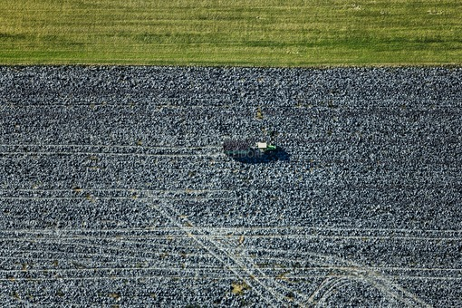 Aerial view of a tractor on a red cabbage field, which is transporting a load of freshly harvested red cabbage - Klaus Leidorf Aerial Photography