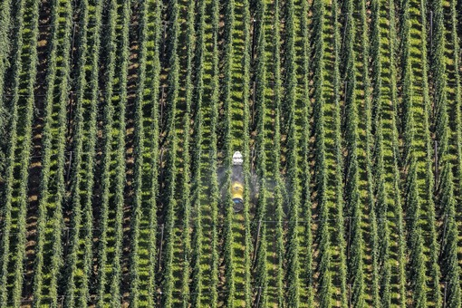 Aerial photograph of a tractor spraying agricultural chemicals in a hop field - Klaus Leidorf Aerial Photography