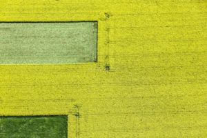 Aerial view of a flowering rape field near Poing - Klaus Leidorf Aerial Photography