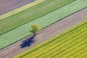 Aerial view of a lonely tree in a field landscape - Klaus Leidorf Aerial Photography