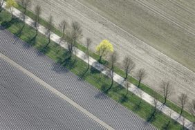 Aerial view of a first spring tree in an avenue - Klaus Leidorf Aerial Photography