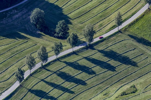 Aerial view of a red car on the country road with birch row - Klaus Leidorf Aerial Photography