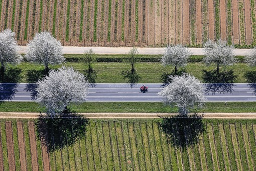 Aerial view of a red motorcycle on a country road between blossoming cherry trees - Klaus Leidorf Aerial Photography