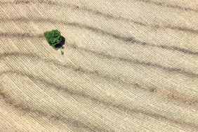 Aerial view of a tree island in a cornfield - Klaus Leidorf Aerial Photography