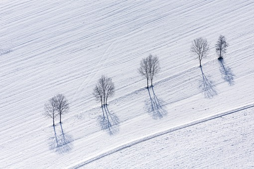 Aerial view of a row of trees in winter - Klaus Leidorf Aerial Photography
