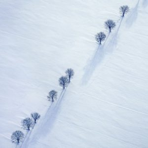 Aerial view of a row of trees in a snowy winter landscape - Klaus Leidorf Aerial Photography
