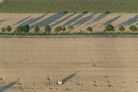 Aerial view of a row of trees and a field chapel in a cornfield, casting shadows - Klaus Leidorf Aerial Photography