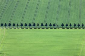 Aerial view of a row of trees between grain fields - Klaus Leidorf Aerial Photography
