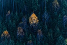 Aerial view of a birch in autumn colouring at the edge of the forest - Klaus Leidorf Aerial Photography