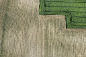 Aerial photograph of a border between grain feather and maize field - Klaus Leidorf Aerial Photography