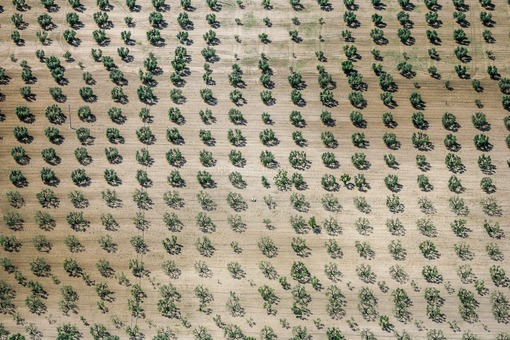 Aerial view of an olive tree plantation in Apulia - Klaus Leidorf Aerial Photography